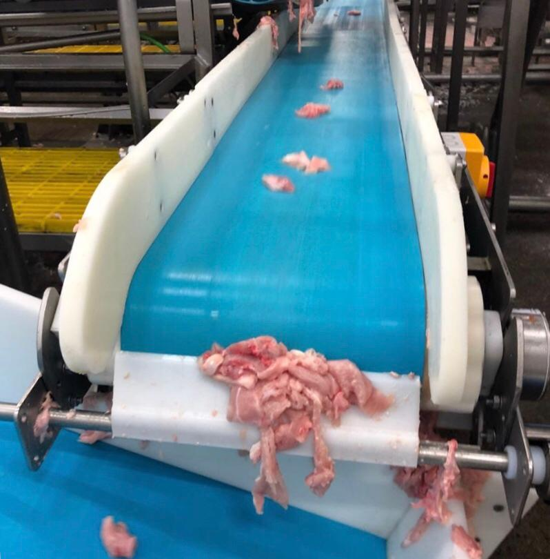 ASGCO Light Duty Conveyor Belting Food Processing Application